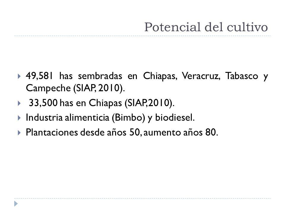 Potencial del cultivo 49,581 has sembradas en Chiapas, Veracruz, Tabasco y Campeche (SIAP, 2010). 33,500 has en Chiapas (SIAP,2010).