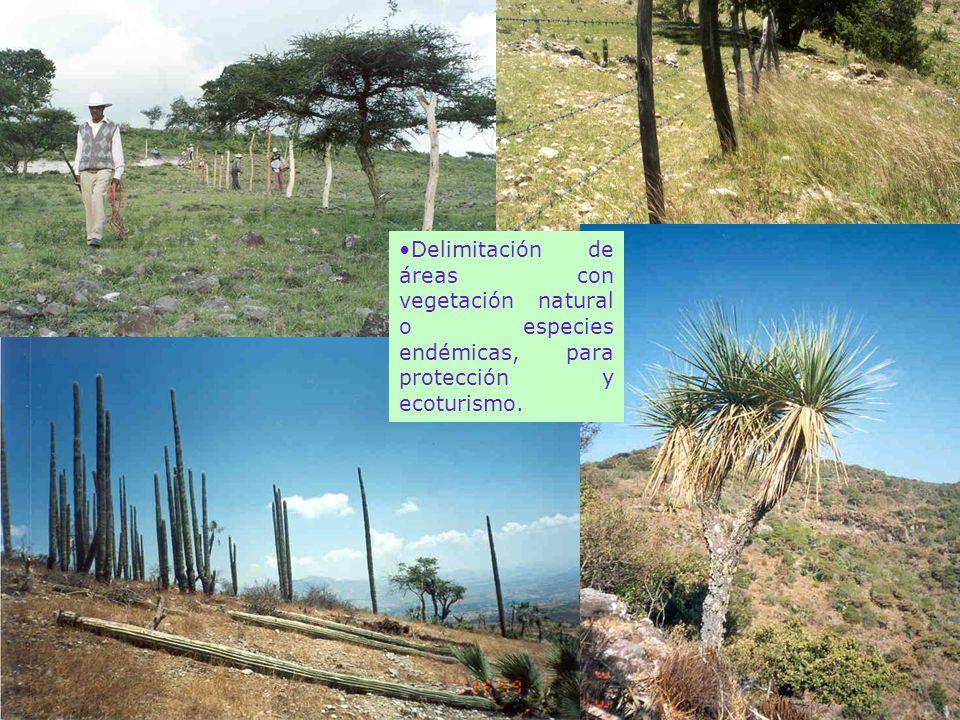 Delimitación de áreas con vegetación natural o especies endémicas, para protección y ecoturismo.