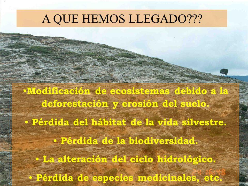 A QUE HEMOS LLEGADO Modificación de ecosistemas debido a la deforestación y erosión del suelo. Pérdida del hábitat de la vida silvestre.