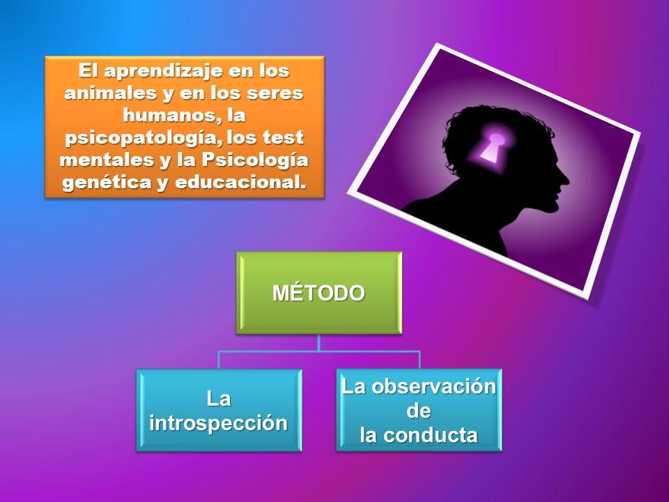 El aprendizaje en los animales y en los seres humanos, la psicopatología, los test mentales y la Psicología genética y educacional.