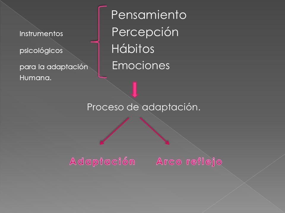 Pensamiento Proceso de adaptación. Adaptación Arco reflejo