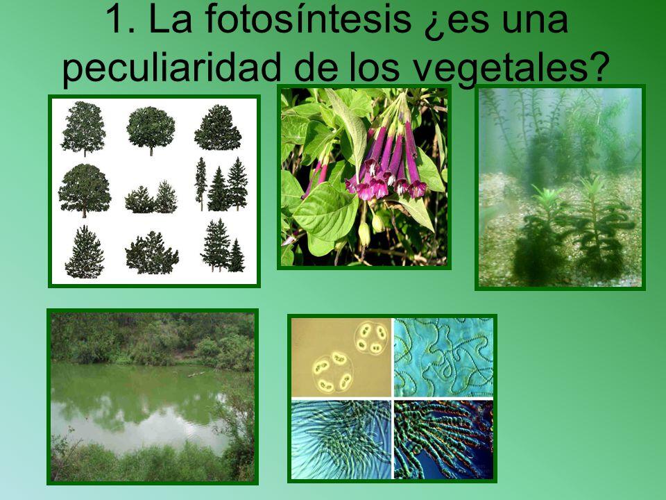 1. La fotosíntesis ¿es una peculiaridad de los vegetales