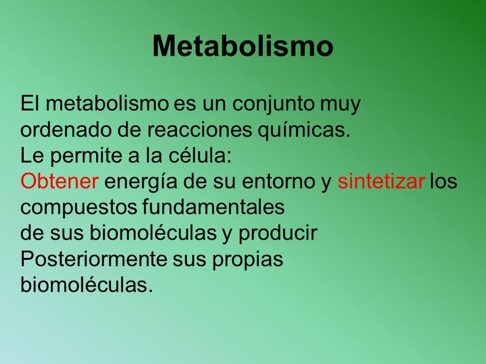 Metabolismo El metabolismo es un conjunto muy