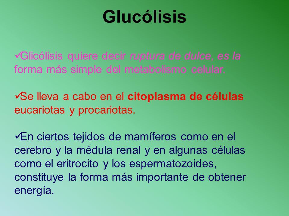 Glucólisis Glicólisis quiere decir ruptura de dulce, es la forma más simple del metabolismo celular.