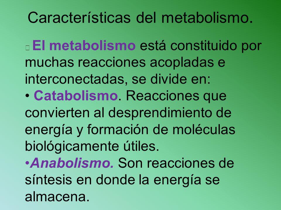 Características del metabolismo.