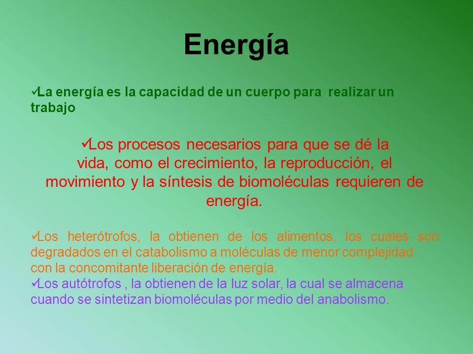 Energía Los procesos necesarios para que se dé la