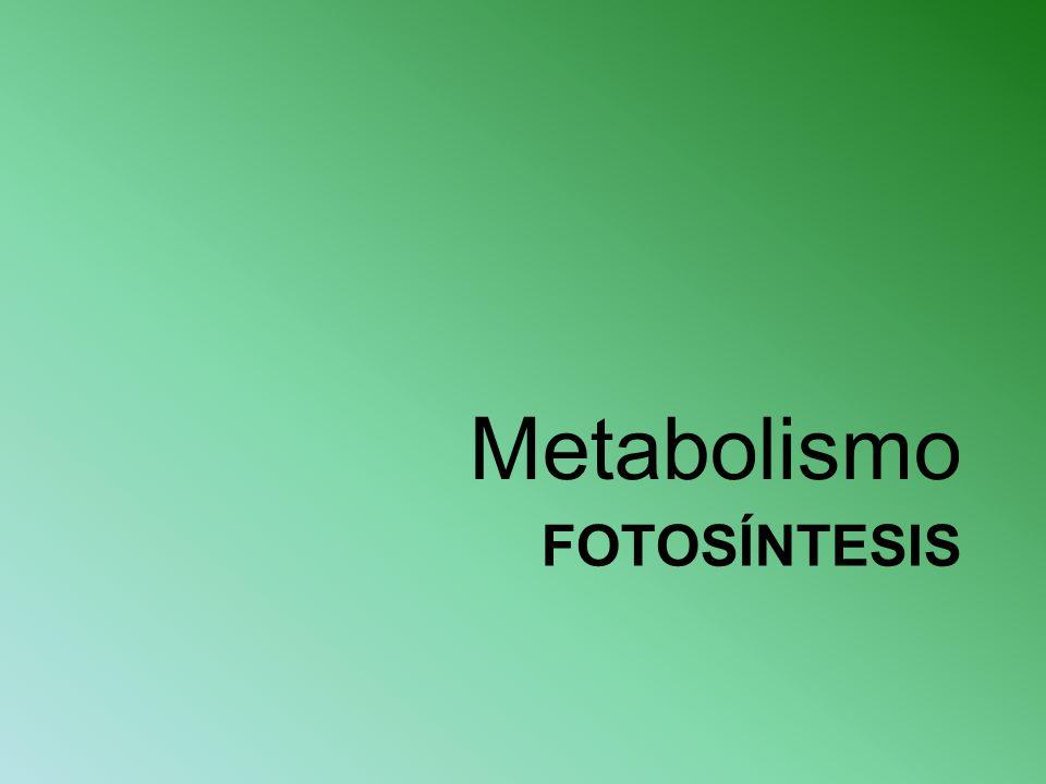Metabolismo Fotosíntesis