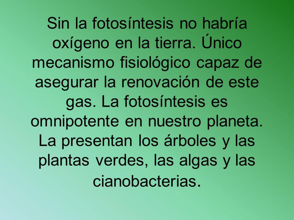 Sin la fotosíntesis no habría oxígeno en la tierra