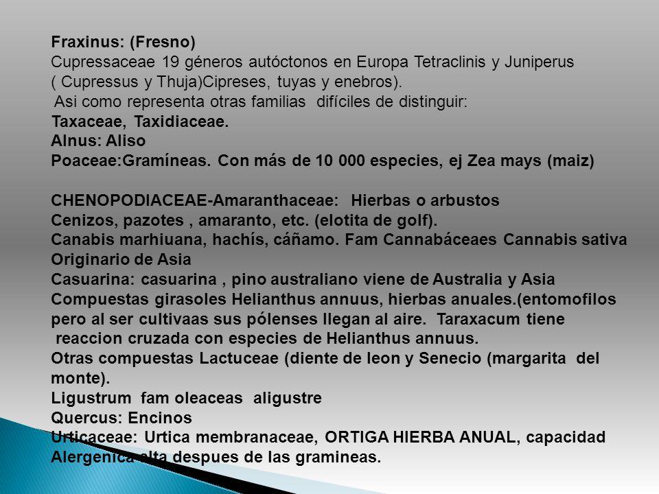 Fraxinus: (Fresno) Cupressaceae 19 géneros autóctonos en Europa Tetraclinis y Juniperus. ( Cupressus y Thuja)Cipreses, tuyas y enebros).