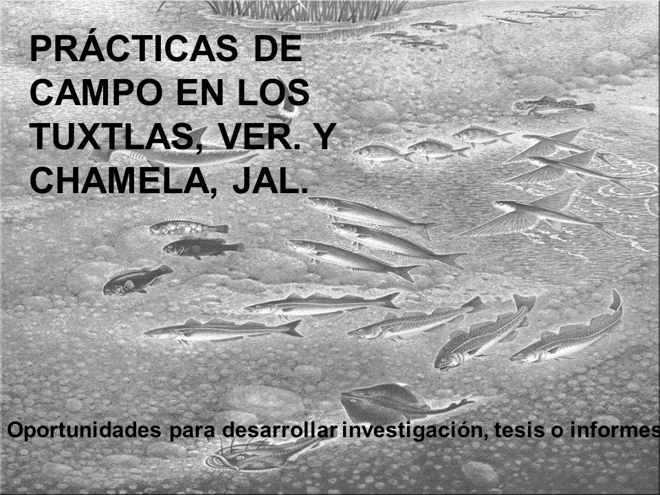 PRÁCTICAS DE CAMPO EN LOS TUXTLAS, VER. Y CHAMELA, JAL.