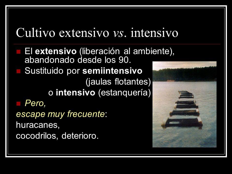 Cultivo extensivo vs. intensivo