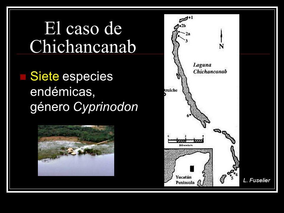 El caso de Chichancanab