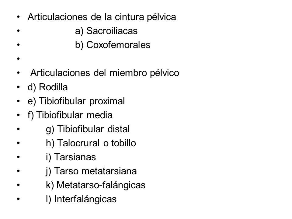 Articulaciones de la cintura pélvica