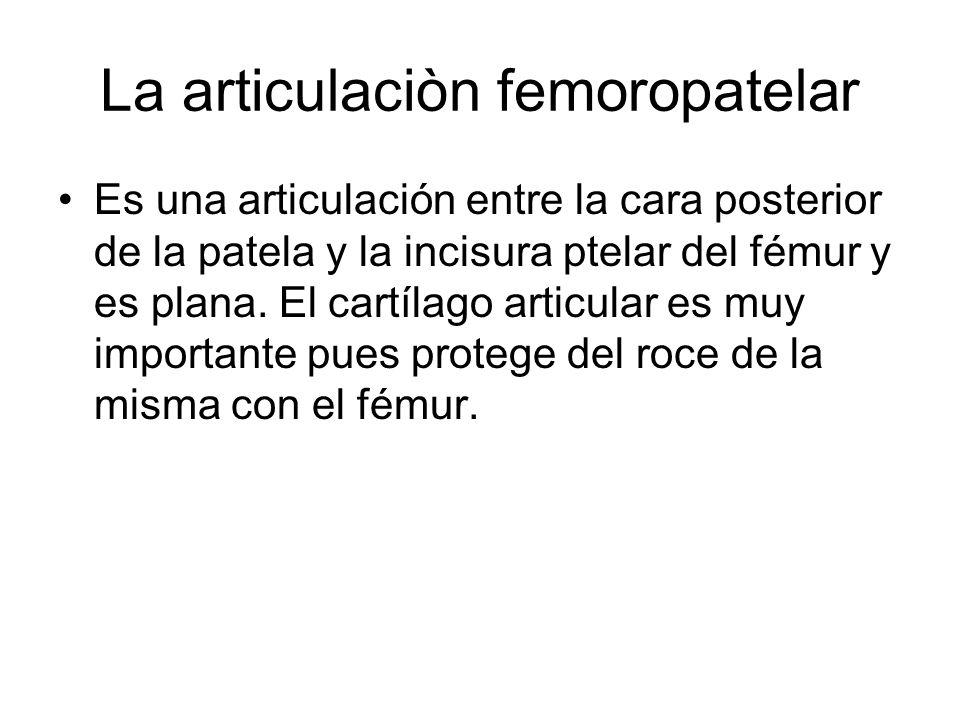 La articulaciòn femoropatelar