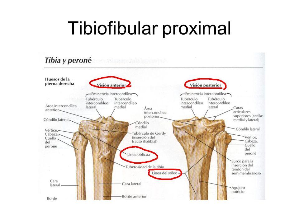 Tibiofibular proximal
