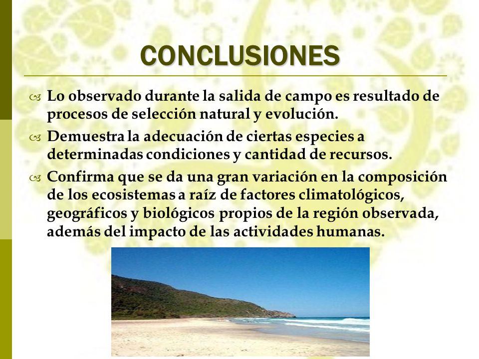 CONCLUSIONES Lo observado durante la salida de campo es resultado de procesos de selección natural y evolución.