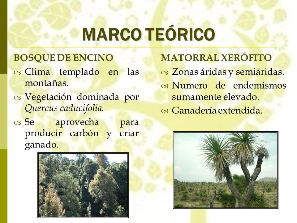 MARCO TEÓRICO BOSQUE DE ENCINO Clima templado en las montañas.