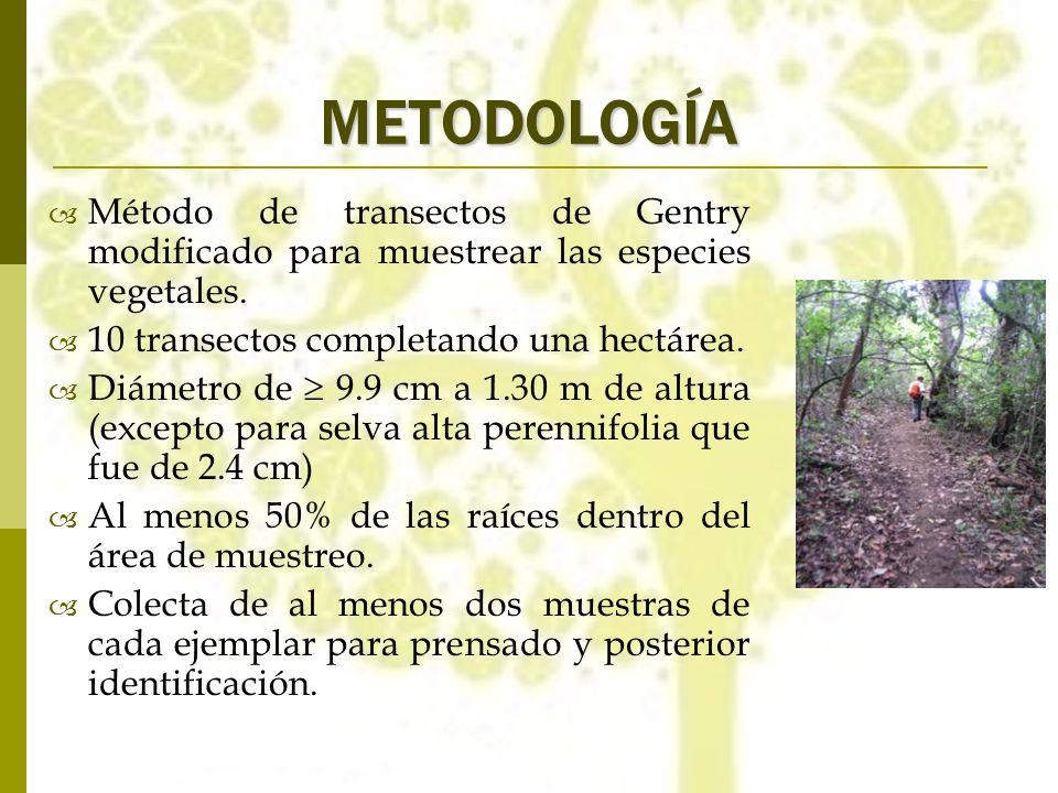 METODOLOGÍA Método de transectos de Gentry modificado para muestrear las especies vegetales. 10 transectos completando una hectárea.