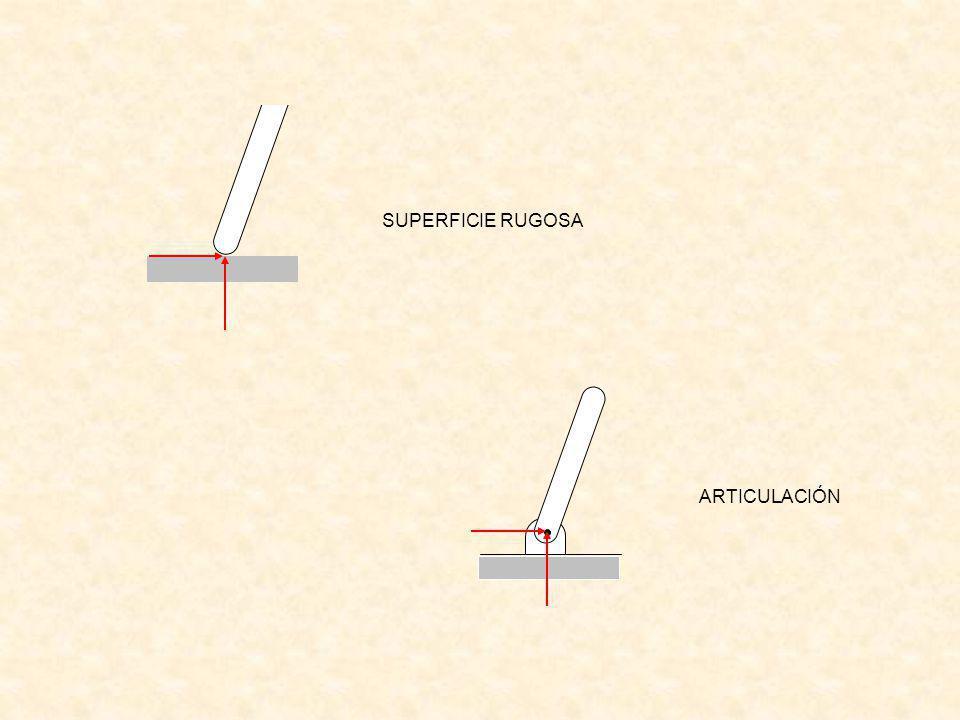 SUPERFICIE RUGOSA ARTICULACIÓN