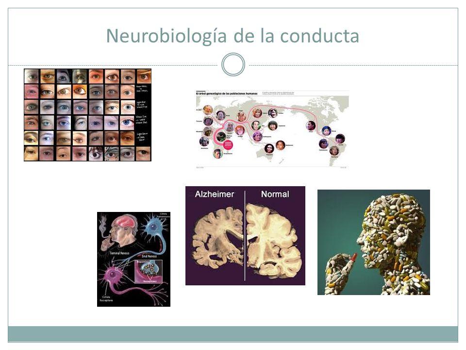 Neurobiología de la conducta