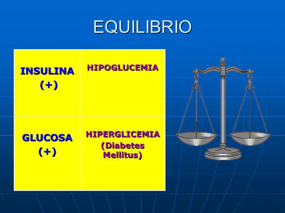 EQUILIBRIO INSULINA (+) GLUCOSA HIPOGLUCEMIA HIPERGLICEMIA