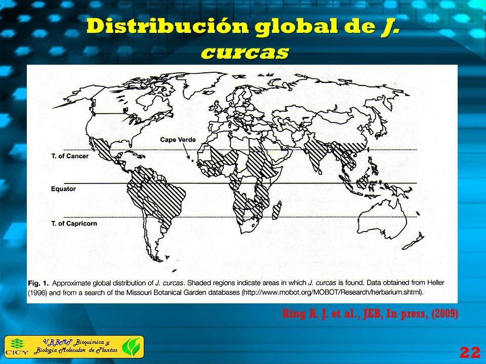 Distribución global de J. curcas