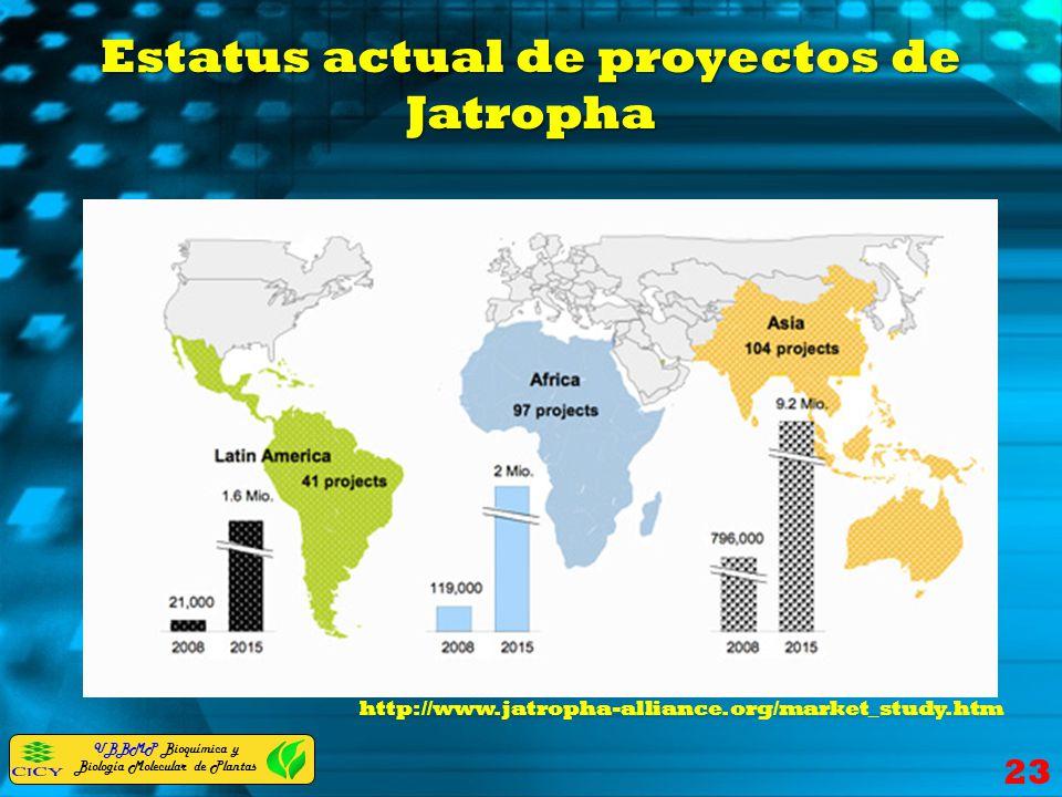 Estatus actual de proyectos de Jatropha