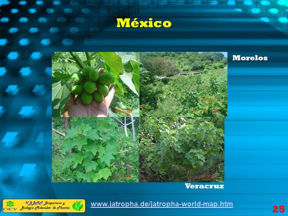 México Morelos Veracruz www.jatropha.de/jatropha-world-map.htm