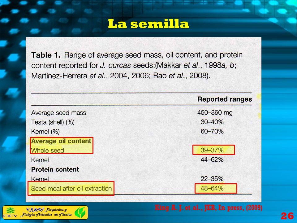 La semilla King A. J. et al., JEB, In press, (2009)