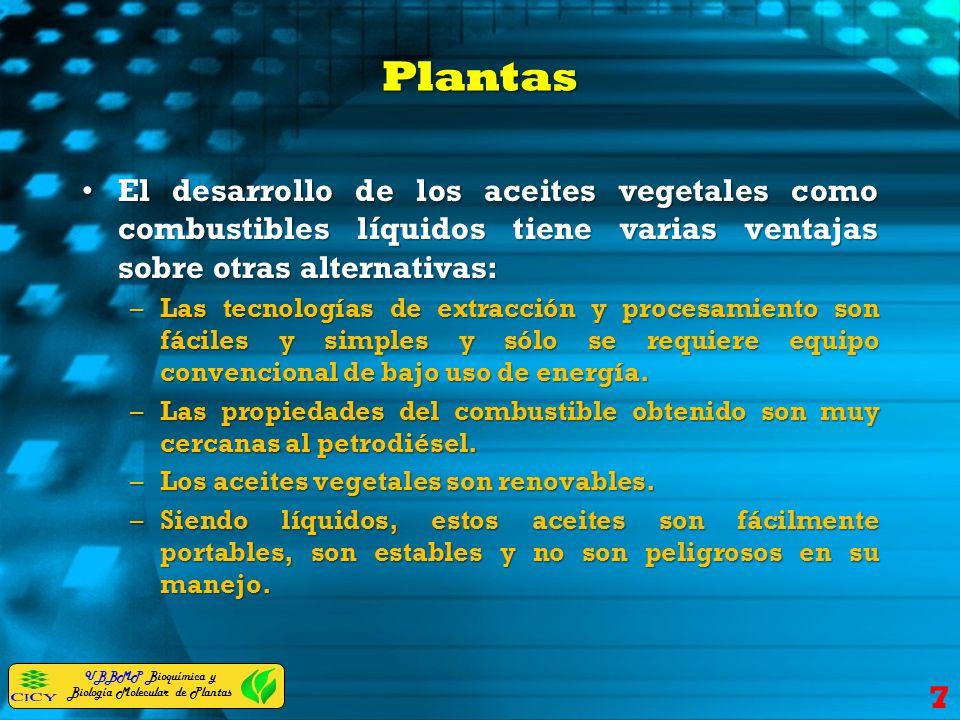 Plantas El desarrollo de los aceites vegetales como combustibles líquidos tiene varias ventajas sobre otras alternativas: