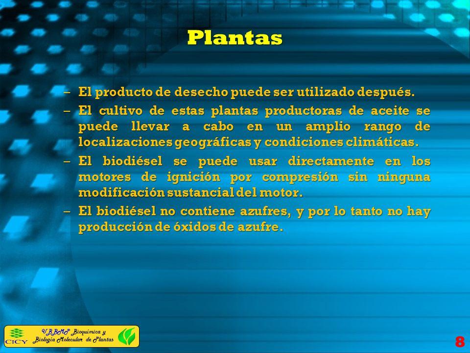 Plantas El producto de desecho puede ser utilizado después.