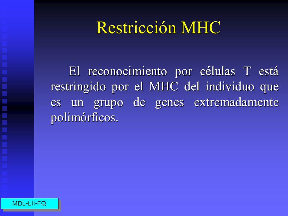 Restricción MHC El reconocimiento por células T está restringido por el MHC del individuo que es un grupo de genes extremadamente polimórficos.