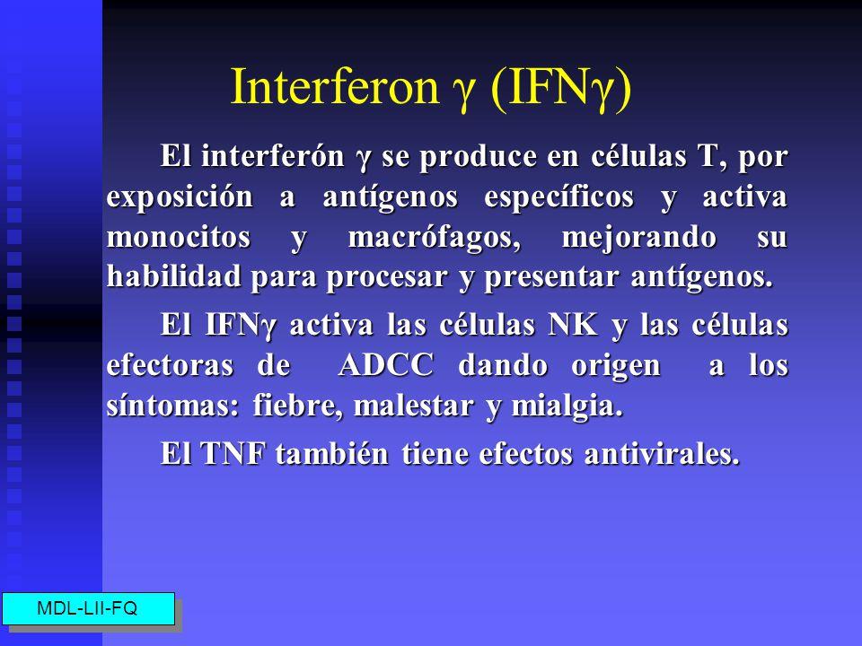 Interferon γ (IFNγ)