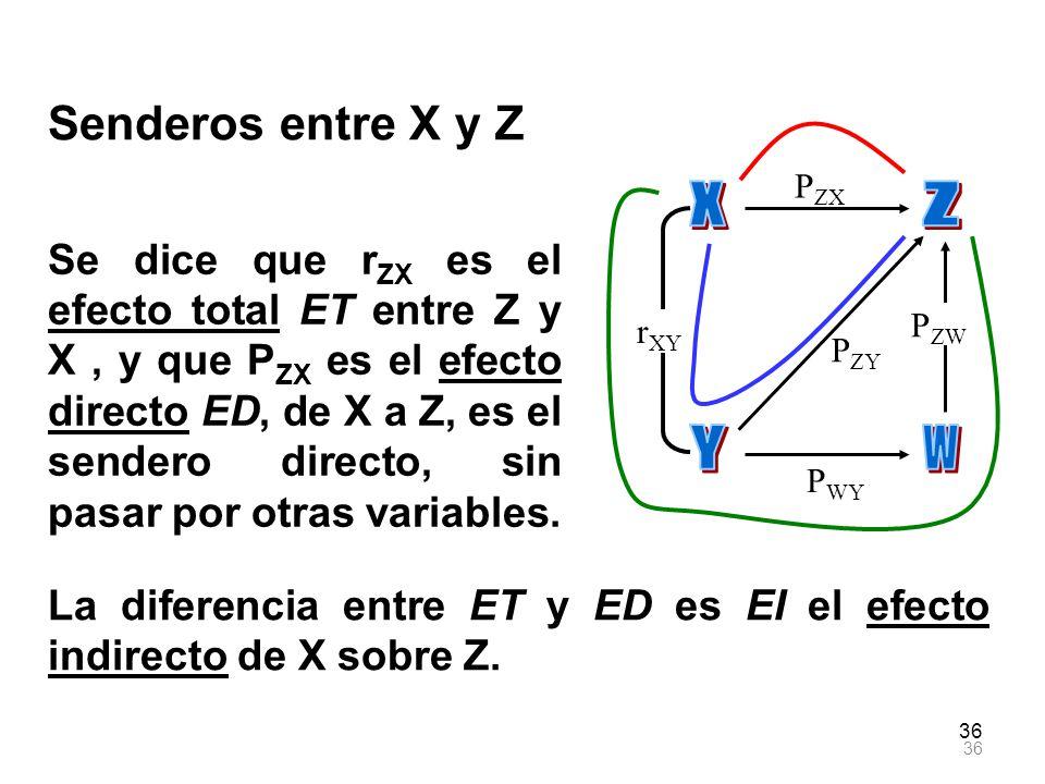 X Y Z W Senderos entre X y Z