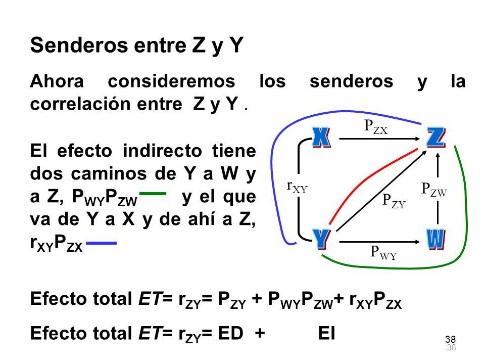 X Z Y W Senderos entre Z y Y