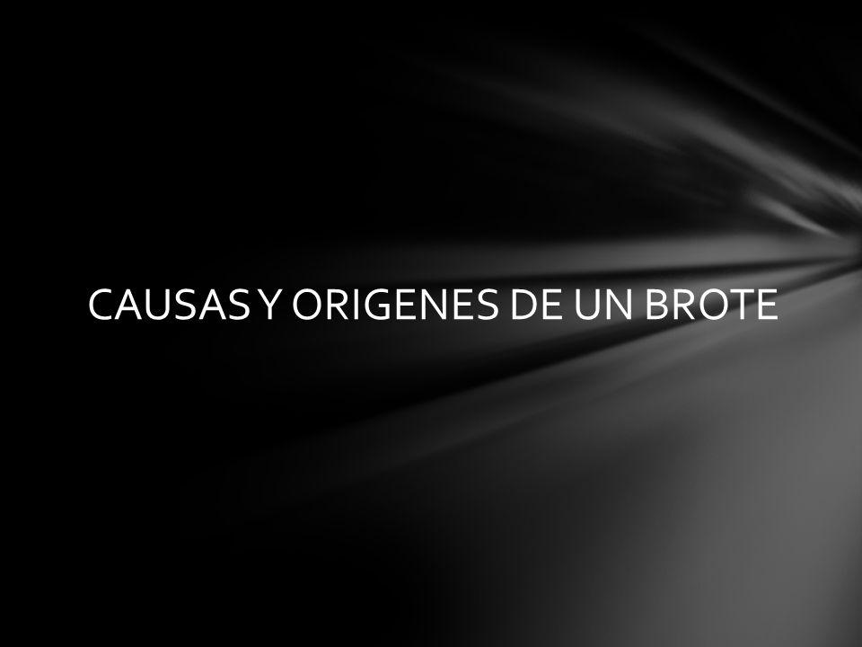 CAUSAS Y ORIGENES DE UN BROTE