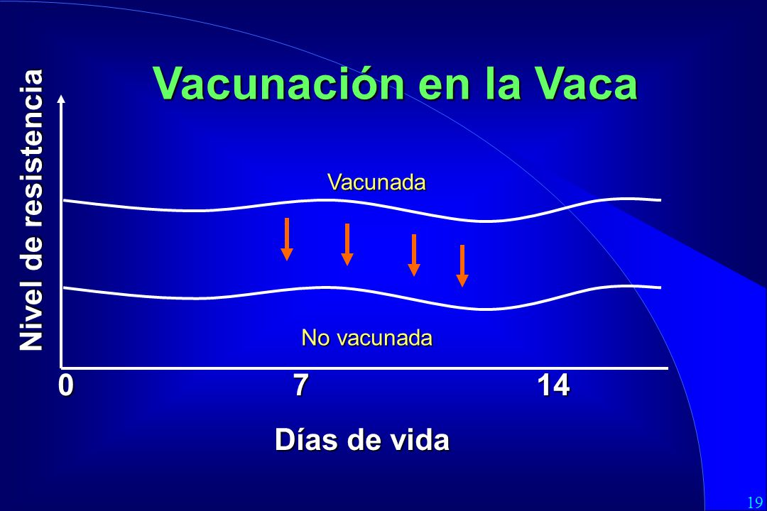 Vacunación en la Vaca Nivel de resistencia 0 7 14 Días de vida