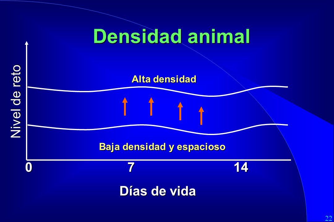 Densidad animal Nivel de reto 0 7 14 Días de vida Alta densidad