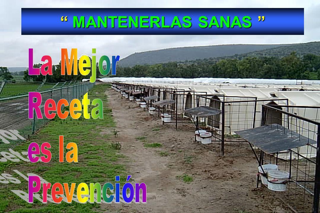 MANTENERLAS SANAS La Mejor Receta es la Prevención