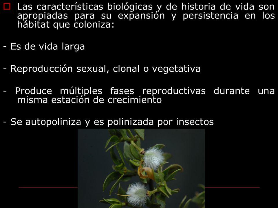 Las características biológicas y de historia de vida son apropiadas para su expansión y persistencia en los hábitat que coloniza: