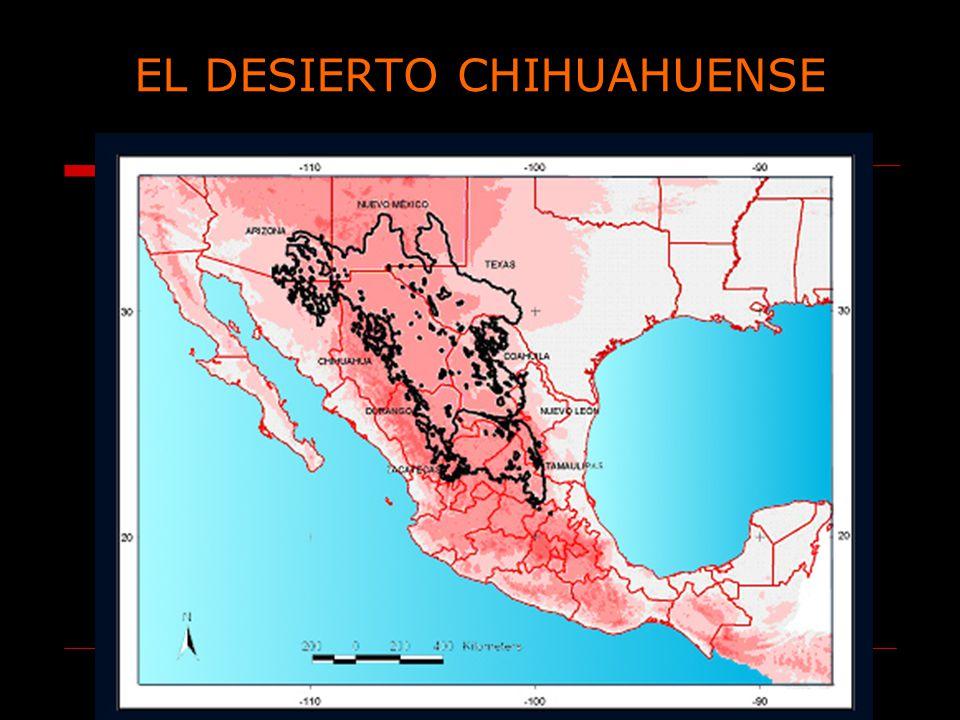 EL DESIERTO CHIHUAHUENSE
