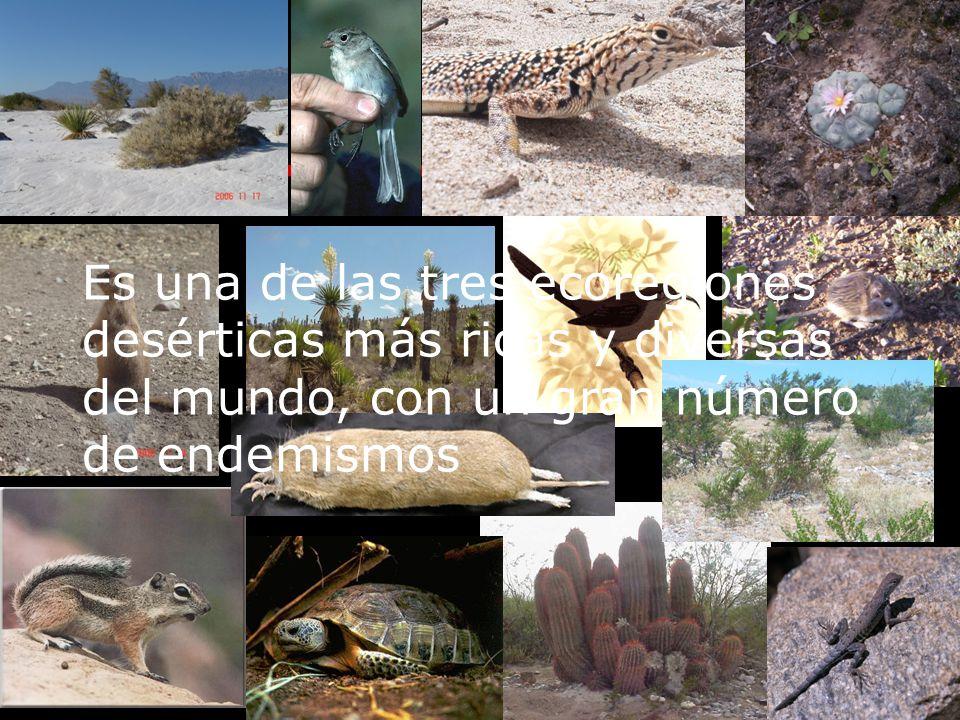 Es una de las tres ecoregiones desérticas más ricas y diversas del mundo, con un gran número de endemismos