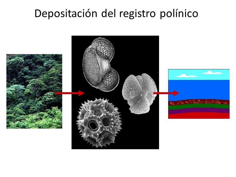 Depositación del registro polínico