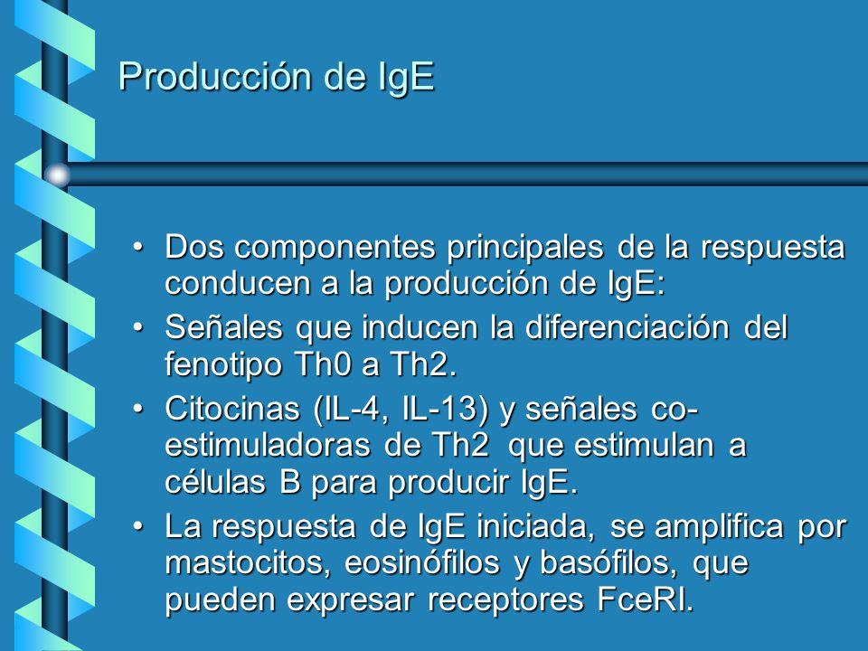 Producción de IgE Dos componentes principales de la respuesta conducen a la producción de IgE: