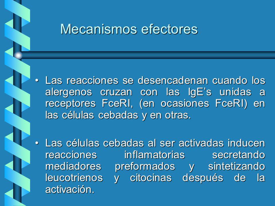 Mecanismos efectores