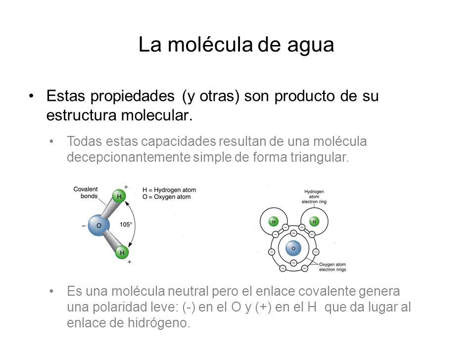 La molécula de agua Estas propiedades (y otras) son producto de su estructura molecular.