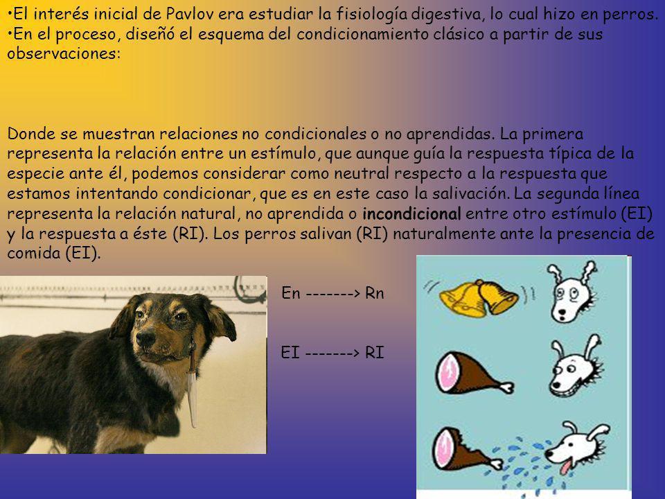 El interés inicial de Pavlov era estudiar la fisiología digestiva, lo cual hizo en perros.