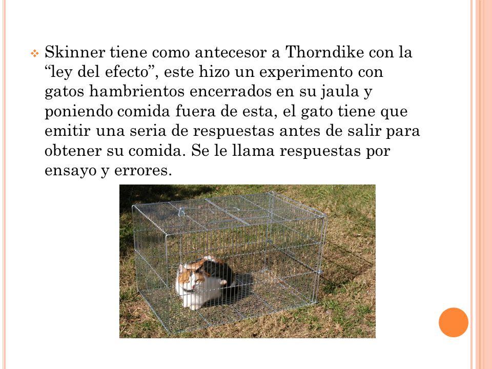 Skinner tiene como antecesor a Thorndike con la ley del efecto , este hizo un experimento con gatos hambrientos encerrados en su jaula y poniendo comida fuera de esta, el gato tiene que emitir una seria de respuestas antes de salir para obtener su comida.