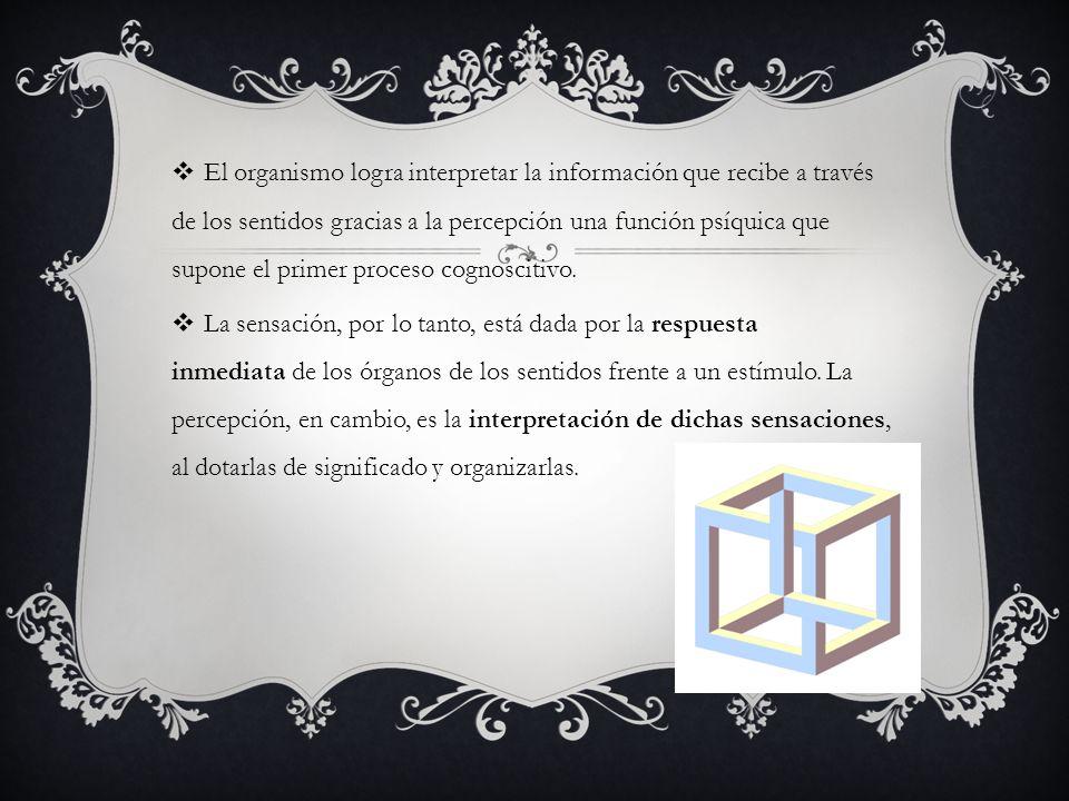 El organismo logra interpretar la información que recibe a través de los sentidos gracias a la percepción una función psíquica que supone el primer proceso cognoscitivo.