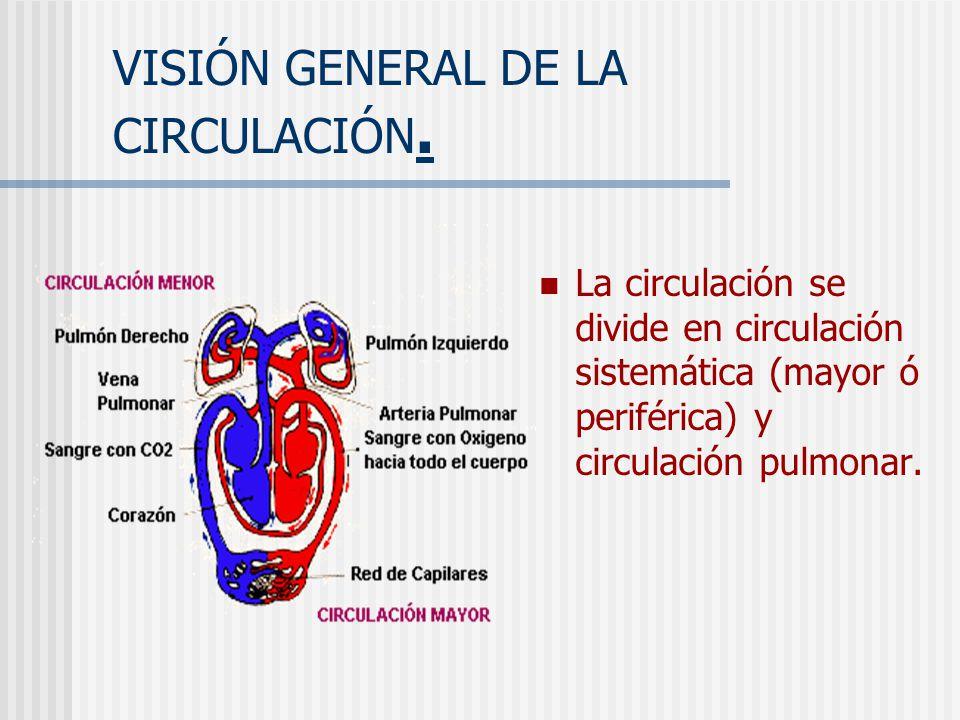 VISIÓN GENERAL DE LA CIRCULACIÓN.